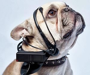 Dog Thoughts Translator